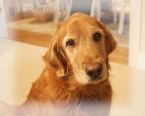 Bear dog turns 15 today