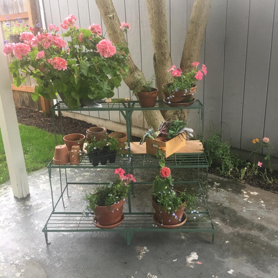 Back patio 12