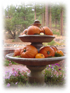 Aaaacd_with_pumpkins_and_cottage_and_cra_1