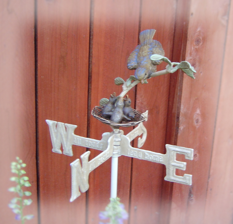 Mama_bird