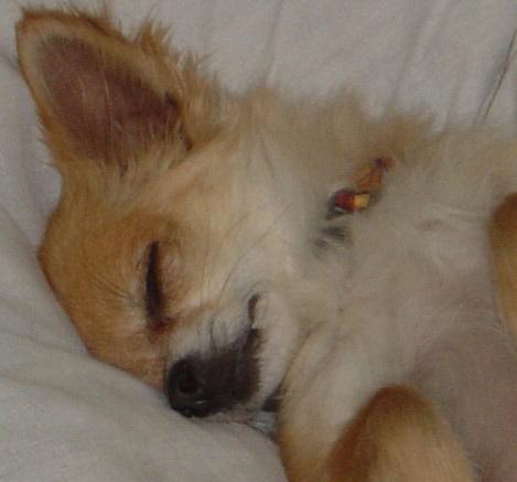 Aa_sleeping_mona