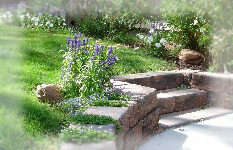 A_midsummer_garden