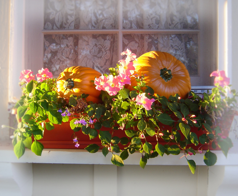 Autumn_window_box