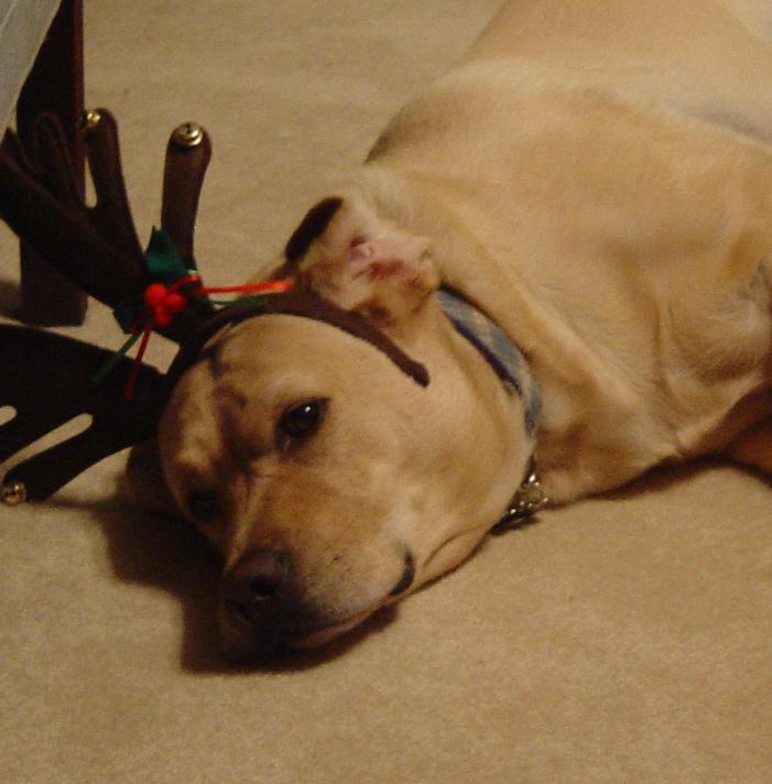 Christmas_dogs_07_0111_2