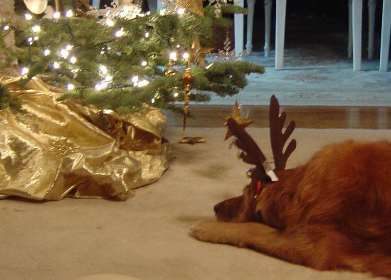Christmas_dogs_07_012