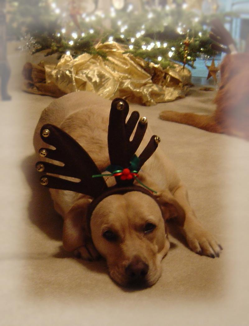 Christmas_dogs_07_00911