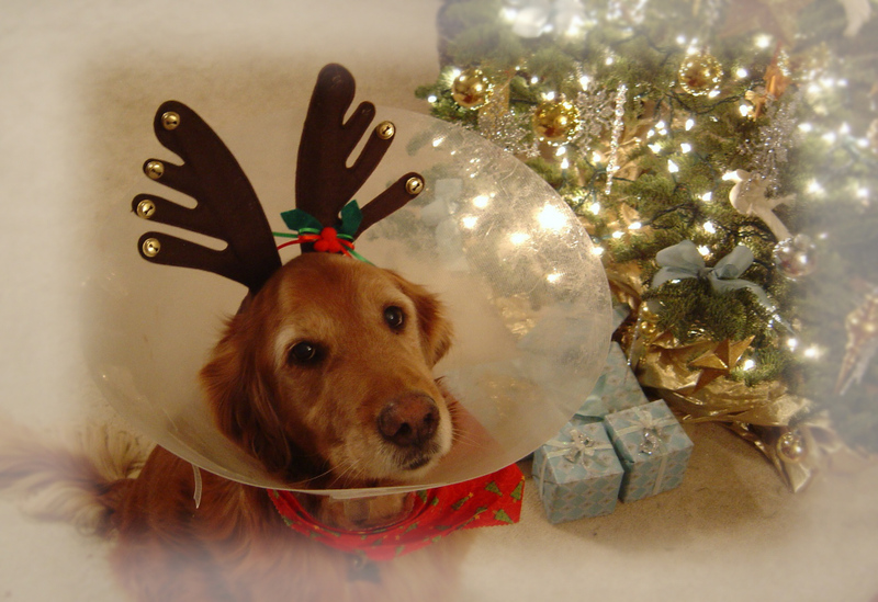 Christmas_bear_008