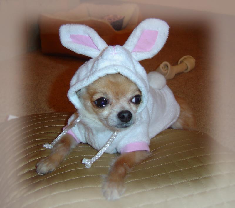 A_lil_mona_bunny_again
