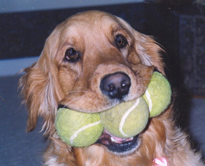 Annie_with_tennis_balls_1